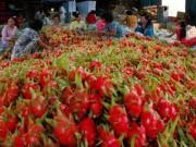 Mua sắm - Giá cả - Phạt 1 thương lái Trung Quốc mua thanh long trái phép