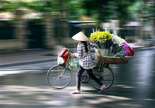 """Hà Nội dịu dàng mùa cúc họa mi """"về"""" phố-10"""