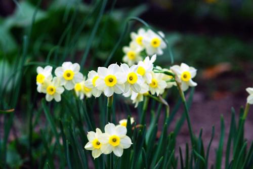 9 loại hoa đẹp nhưng cực độc, tuyệt đối không trồng trong nhà có trẻ nhỏ-4