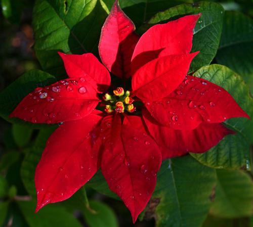 9 loại hoa đẹp nhưng cực độc, tuyệt đối không trồng trong nhà có trẻ nhỏ-1