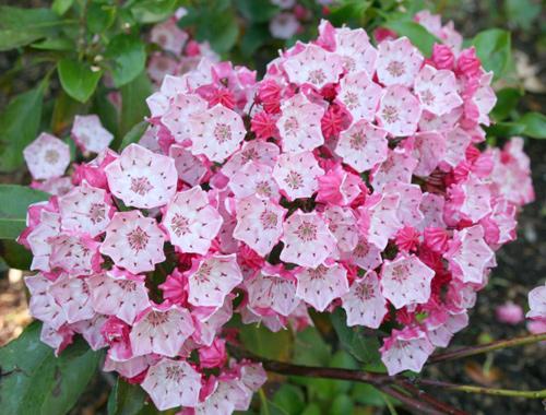 9 loại hoa đẹp nhưng cực độc, tuyệt đối không trồng trong nhà có trẻ nhỏ-11
