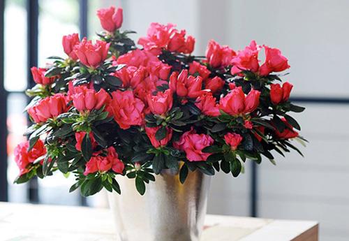 9 loại hoa đẹp nhưng cực độc, tuyệt đối không trồng trong nhà có trẻ nhỏ-8