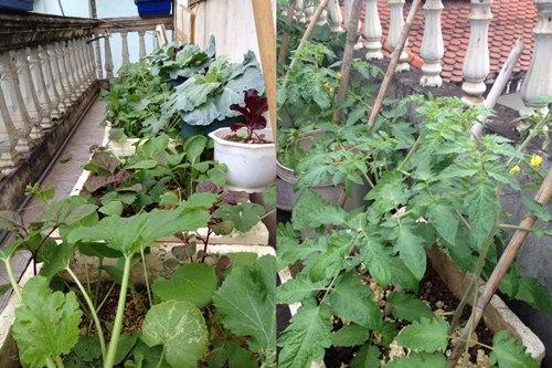Cô giáo về hưu tiết kiệm tiền triệu mỗi tháng nhờ vườn rau sân thượng-1