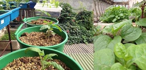 Cô giáo về hưu tiết kiệm tiền triệu mỗi tháng nhờ vườn rau sân thượng-2