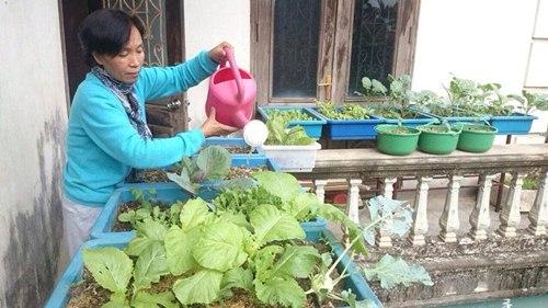 Cô giáo về hưu tiết kiệm tiền triệu mỗi tháng nhờ vườn rau sân thượng-3