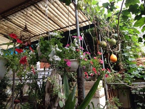Cô giáo về hưu tiết kiệm tiền triệu mỗi tháng nhờ vườn rau sân thượng-16