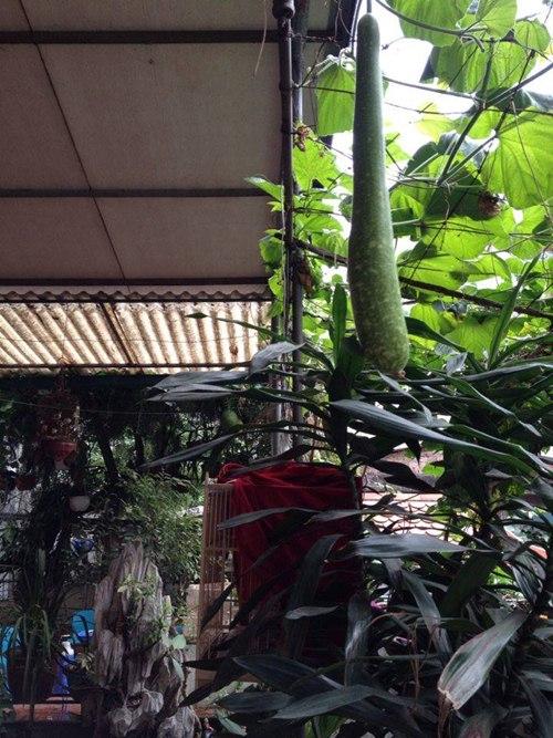 Cô giáo về hưu tiết kiệm tiền triệu mỗi tháng nhờ vườn rau sân thượng-11