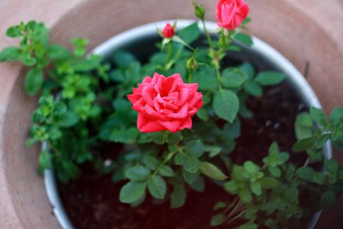trong 5 loai hoa nay vao thang cuoi nam de hoa giai phong thuy xau trong nha - 1