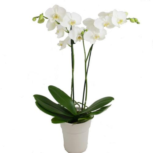 trong 5 loai hoa nay vao thang cuoi nam de hoa giai phong thuy xau trong nha - 3