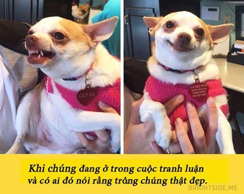 15 buc anh chung minh nguoi yeu co the khong co nhung cho nhat dinh phai co 1 con - 1