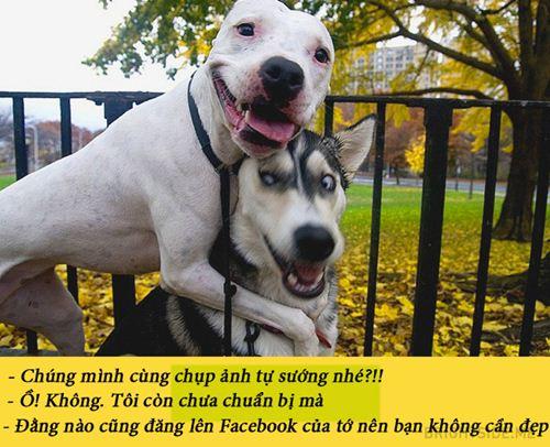 15 buc anh chung minh nguoi yeu co the khong co nhung cho nhat dinh phai co 1 con - 6