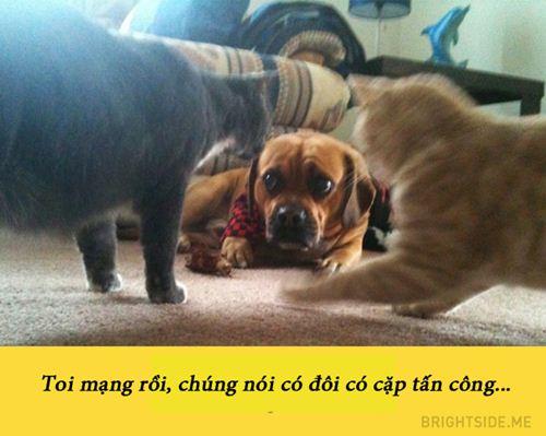 15 buc anh chung minh nguoi yeu co the khong co nhung cho nhat dinh phai co 1 con - 11