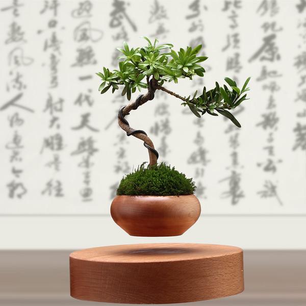 "cay trong chau xua roi, tet nam nay moi nguoi ""choi"" bonsai bay - 5"
