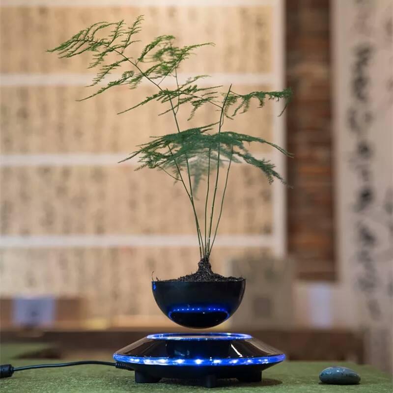 "cay trong chau xua roi, tet nam nay moi nguoi ""choi"" bonsai bay - 11"