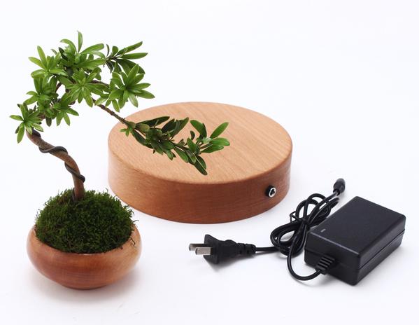 "cay trong chau xua roi, tet nam nay moi nguoi ""choi"" bonsai bay - 6"