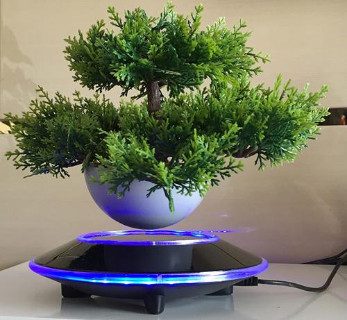"cay trong chau xua roi, tet nam nay moi nguoi ""choi"" bonsai bay - 13"