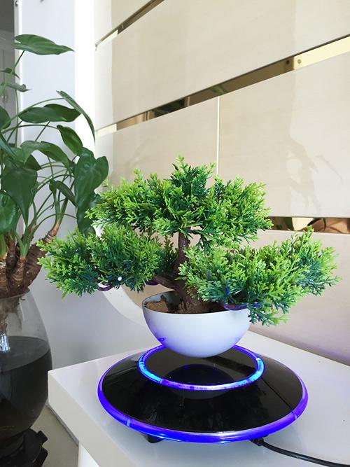 "cay trong chau xua roi, tet nam nay moi nguoi ""choi"" bonsai bay - 14"
