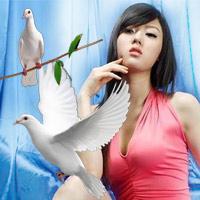 Chim chóc và sức mạnh phong thủy