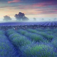 """Những cánh đồng hoa đẹp """"tái tê"""""""