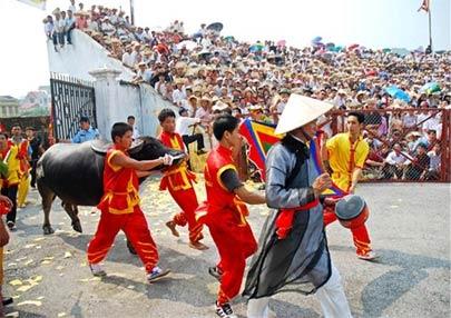 Lễ hội chọi trâu Đồ Sơn - 2