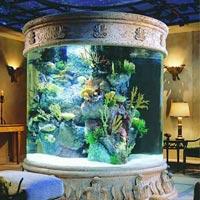Nhà đẹp long lanh với bể thủy sinh độc đáo