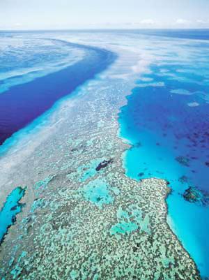 Rạn san hô vĩ đại nhất thế giới - 1