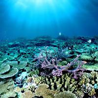 Rạn san hô vĩ đại nhất thế giới