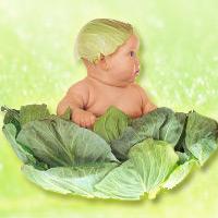 """Mẹ kể con nghe: """"Bắp cải xanh"""""""