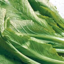 Phương thuốc hay từ cải bẹ xanh