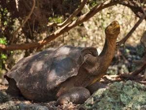 4 cụ rùa khổng lồ nổi tiếng nhất thế giới