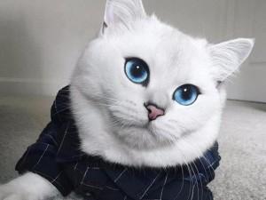 Ngắm chú mèo có đôi mắt đẹp nhất thế giới