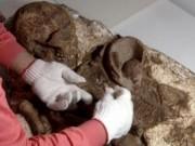Tin tức - Phát hiện hóa thạch 'mẹ và bé' 4.800 năm ở Đài Loan