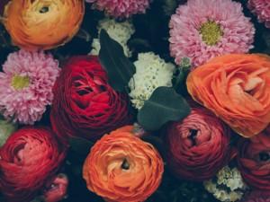 Ý nghĩa 10 loài hoa quen thuộc giúp bạn gửi trúng thông điệp tình yêu