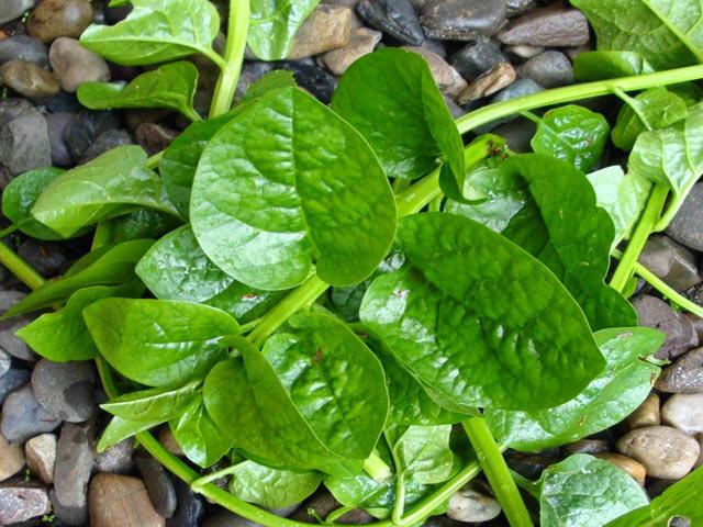 Tác hại không ngờ của một số loại rau vẫn thường ăn