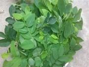 Thực hư ăn rau ngót bị sảy thai