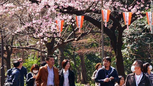 """""""Hanami"""" hay còn gọi là """"ngắm hoa anh đào"""" là thú tiêu khiển của Nhật Bản, đã có thể bắt đầu sớm vào năm nay."""