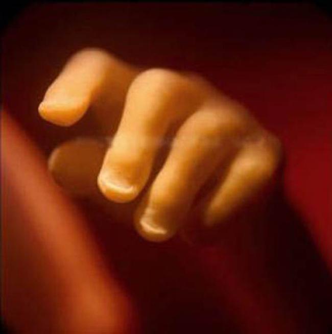 19 tuần tuổi: Em bé trong bụng mẹ đã có móng tay khá dài.