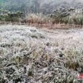 Tin tức - Nghệ An: Sương muối chứ không phải băng tuyết