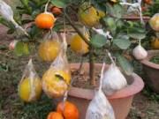Mua sắm - Giá cả - Độc đáo vườn cây 9 loại quả bạc tỷ của lão nông Hà Nội
