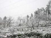 Tin tức - Hà Nội rét đậm, vùng núi cao có băng giá