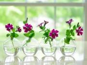 Trang trí nhà cửa - Mẹ Việt trên đất Mỹ chuộng cách cắm hoa tự nhiên