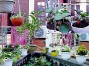 Nhà đẹp - Vườn 20m2 đủ trồng cây, thả cá, nuôi gà ở Hoàn Kiếm