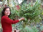 Nhà đẹp - Mục sở thị vườn lan rừng vô giá của cô giáo Hà Nội