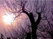Cây cảnh - Vườn - Chọn đào chuẩn không đắt cho năm mới viên mãn