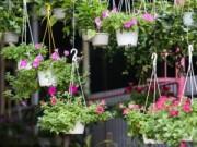 Tin tức - Hà Nội ngập tràn cây cảnh, hoa cảnh trưng Tết
