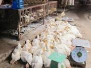 Tin tức - Cúm A/H7N9 tiến sát Việt Nam