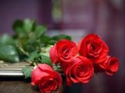 Nhà đẹp - Nên hay không vứt bỏ hồng tình yêu vì phong thủy xấu?