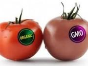 Y tế - Cây trồng biến đổi gen không gây hại cho con người