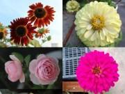 Nhà đẹp - Triệu phú của trăm cây hoa đẹp - độc - lạ ở Hà Nội