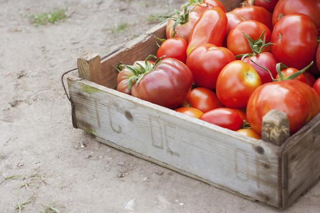 1. Cà chua  Cà chua ngon và bổ dưỡng nhất khi chín, nhưng đặt chúng trong tủ lạnh có thể làm dừng hẳn lại quá trình chín của nó. Khi lưu trữ cà chua trong tủ lạnh, độ lạnh sẽ phá hỏng kết cấu trong quả cà chua và làm cho cà chua bị bở.Hãy cố gắng mua cà chua tươi mỗi khi bạn cần và chỉ mua vừa đủ.